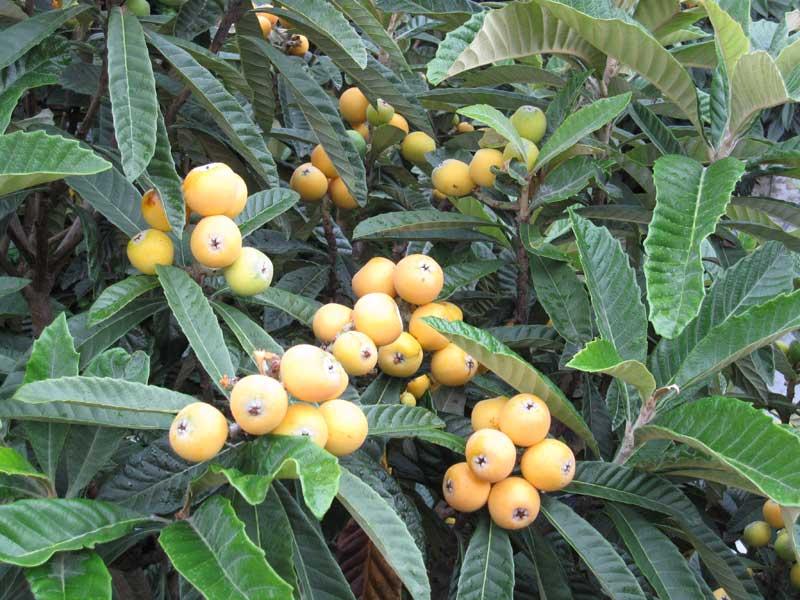 植物のチカラ